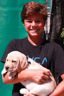 yellow lab, puppy, boy