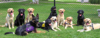 A group photo of dogs in a gated area